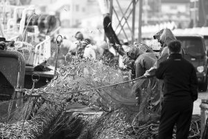 Black and white photography at the fish market in Busan, South Korea.