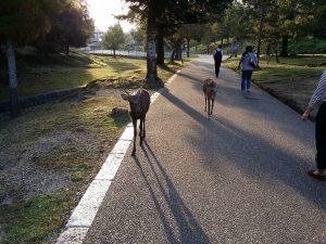 Nara Park Nara Japan