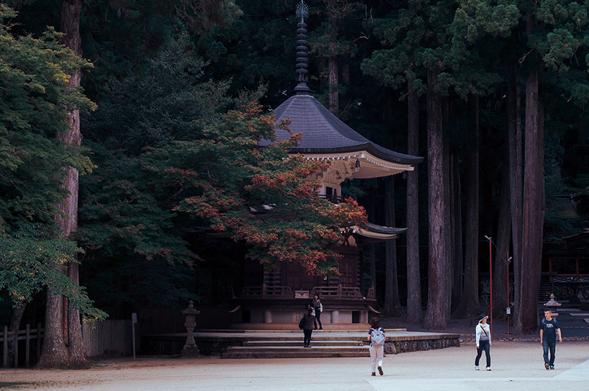 A pagoda stands tall surrounded by large trees