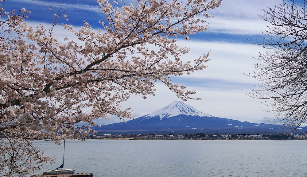 Cherry blossoms and mountain