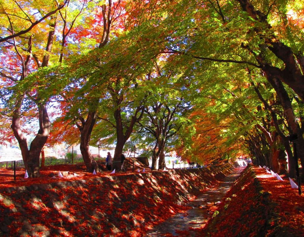Autumn leaves and red trees line a tunnel
